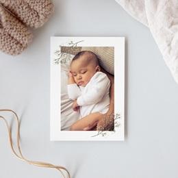 Carte de Remerciement Naissance Brindilles Baies Beiges, photo gratuit