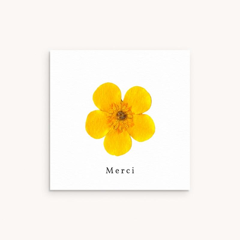 Carte de Remerciement Naissance Herbier ensoleillé, 10 x 10 cm