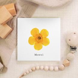 Carte de Remerciement Naissance Herbier ensoleillé, 10 x 10 cm gratuit